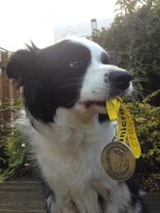 Jedburgh Running festival Medal for all finisher - nice ribbon with Canicross 2013 on it too
